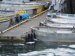 Docked Skiffs